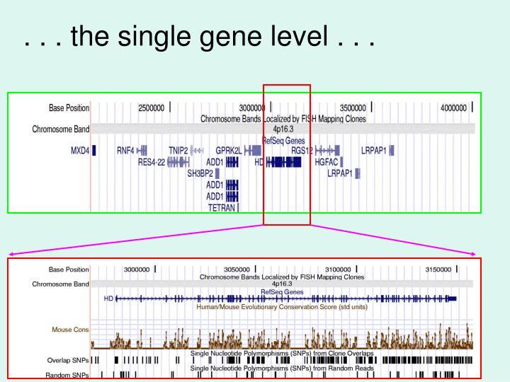 . . . the single gene level . . .