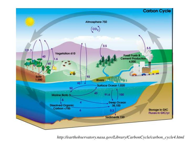 http://earthobservatory.nasa.gov/Library/CarbonCycle/carbon_cycle4.html