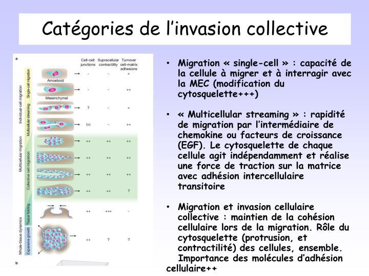 Catégories de l'invasion collective