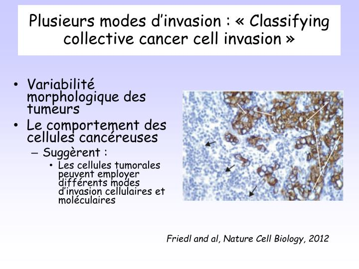Plusieurs modes d'invasion : «Classifying collective cancer cell invasion»
