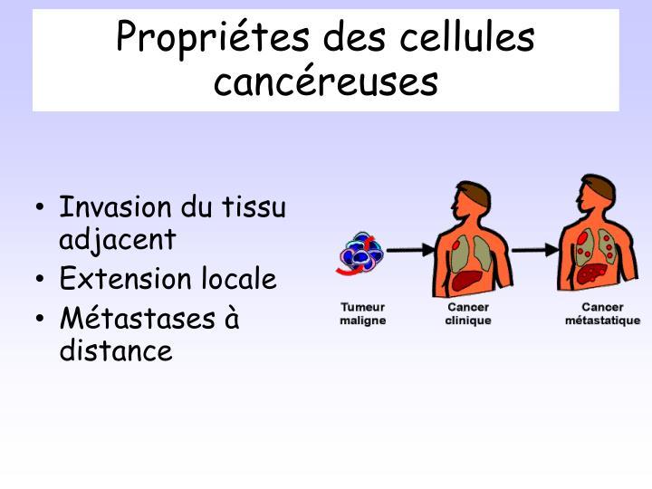 Propri tes des cellules canc reuses