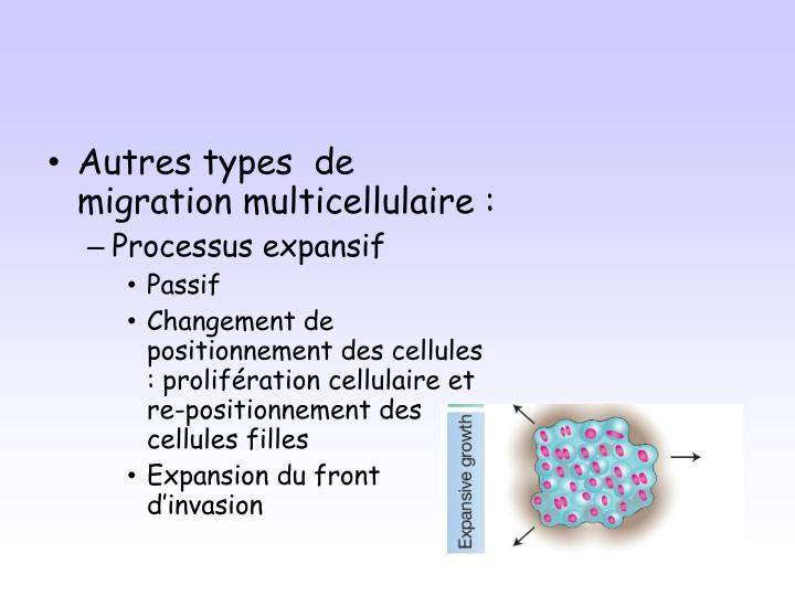 Autres types  de migration multicellulaire :