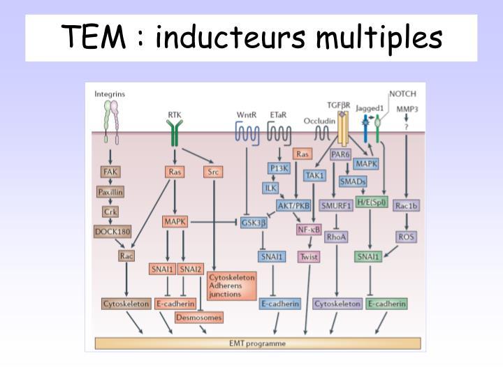 TEM : inducteurs multiples