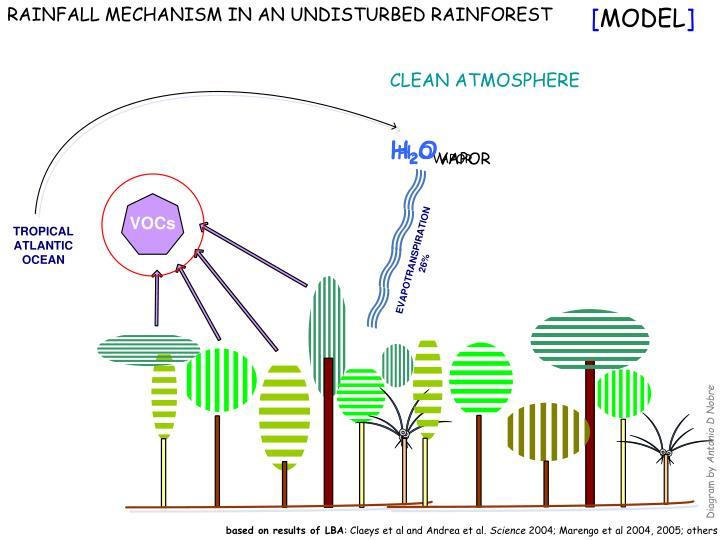 RAINFALL MECHANISM IN AN UNDISTURBED RAINFOREST