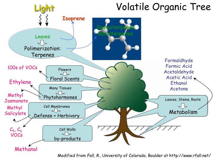 Volatile Organic Tree