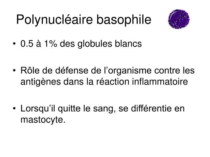 Polynucléaire basophile