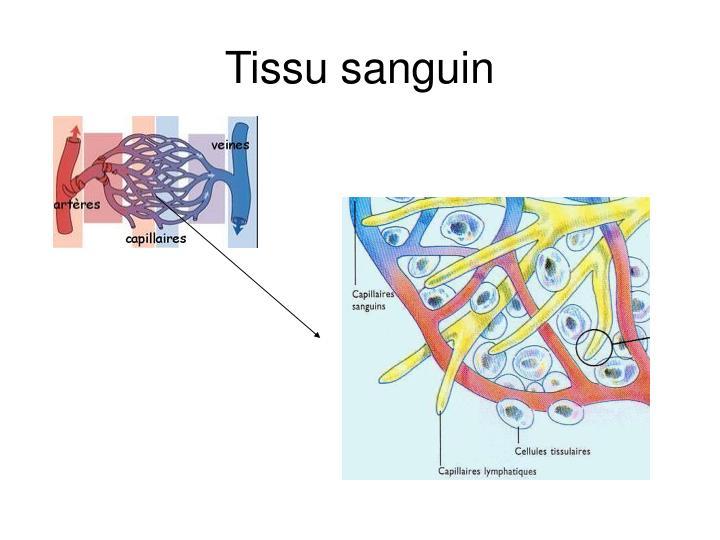 Tissu sanguin