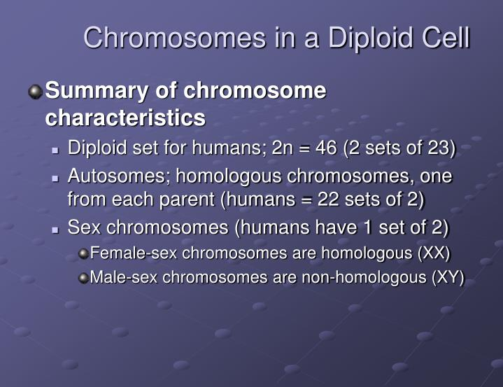 Chromosomes in a Diploid Cell