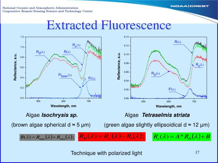 Extracted Fluorescence