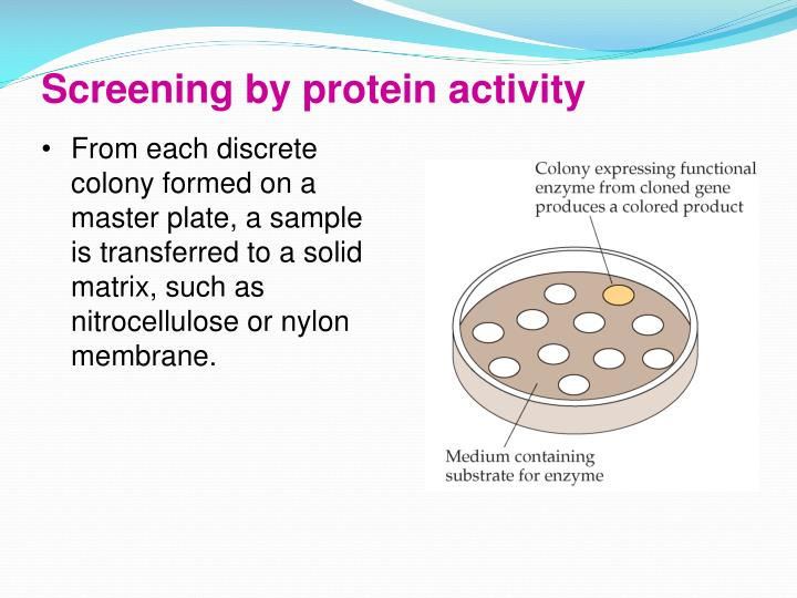 Screening by protein activity