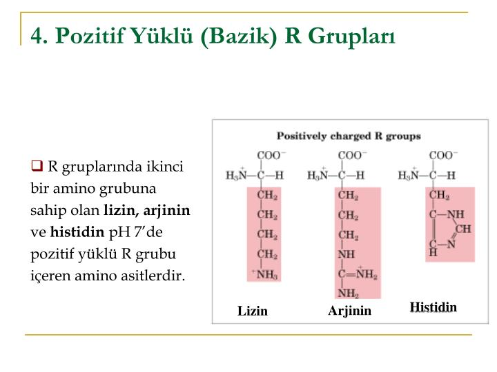 4. Pozitif Yüklü (Bazik) R Grupları