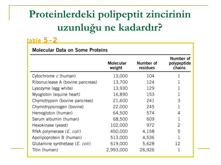 Proteinlerdeki polipeptit zincirinin uzunluğu ne kadardır?