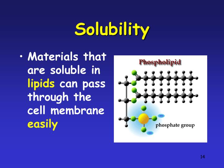 effect of lipid solubility on permeability Processing and storage affect lipids in a number of ways 55 effect of olive leaves and their harvest time on radical scavenging activity and oxidative stability of refined oil (keceli and harp, 2014) aim: to determinetheeffect of oliveleavesand their harvest timeon radical scavenging activity and.