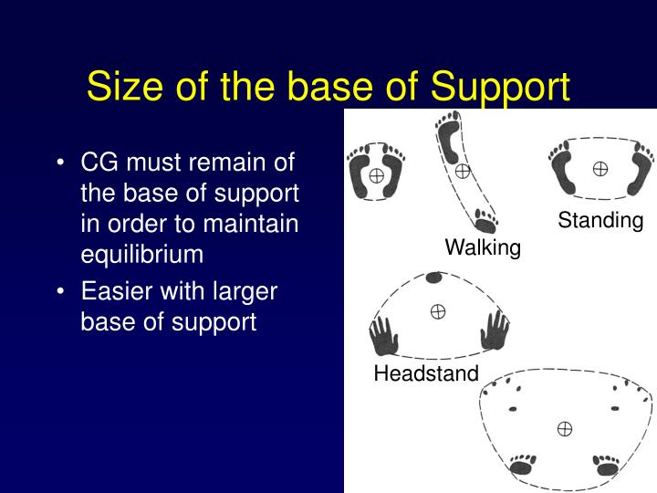 Size of the base of Support