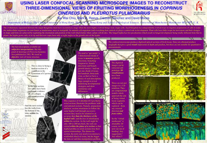 USING LASER CONFOCAL SCANNING MICROSCOPE IMAGES TO RECONSTRUCT THREE-DIMENSIONAL VIEWS OF FRUITING M...