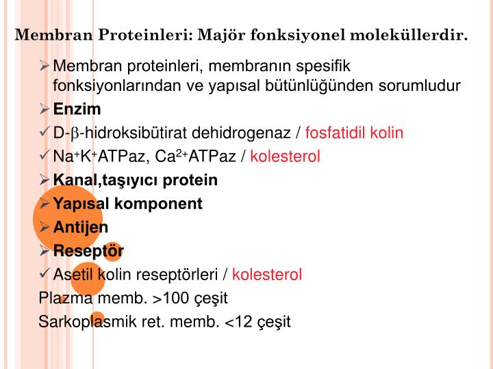 Membran Proteinleri: Majör fonksiyonel moleküllerdir.