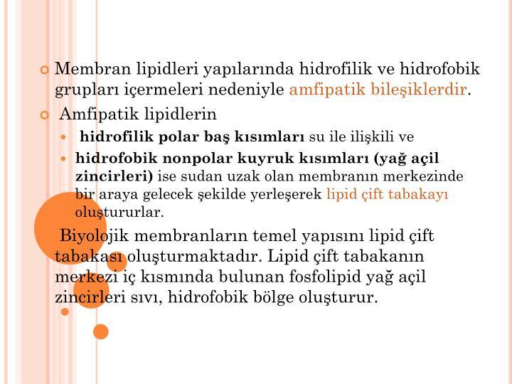 Membran lipidleri yapılarında hidrofilik ve hidrofobik grupları içermeleri nedeniyle