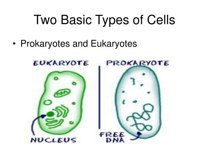 Two Basic Types of Cells