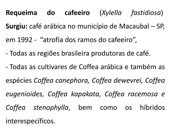 Requeima do cafeeiro