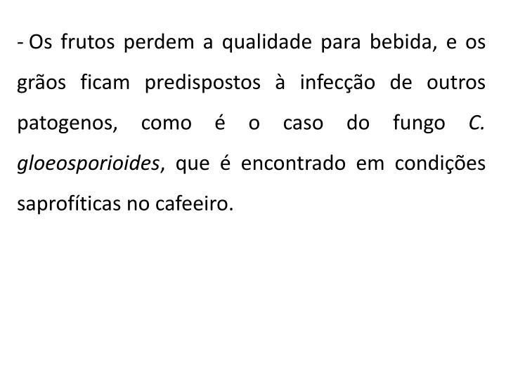 Os frutos perdem a qualidade para bebida, e os grãos ficam predispostos à infecção de outros patogenos, como é o caso do fungo