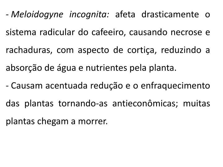 Meloidogyne incognita: