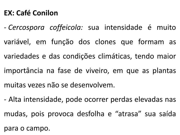 EX: Café Conilon