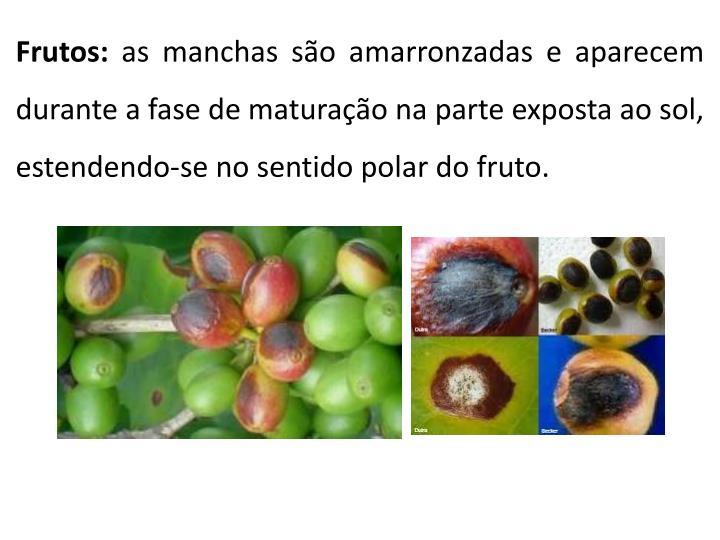 Frutos: