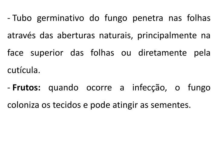 Tubo germinativo do fungo penetra nas folhas através das aberturas naturais, principalmente na face superior das folhas ou diretamente pela cutícula.