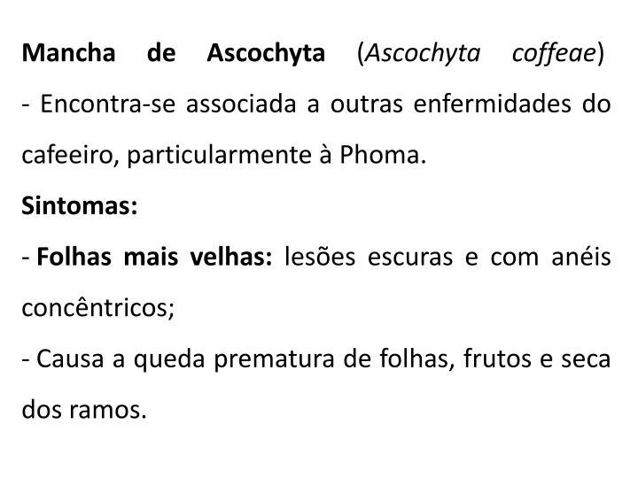 Mancha de Ascochyta