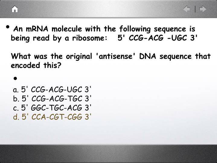 An mRNA molecule with the following sequence is being read by a ribosome:   5' CCG-ACG -UGC 3'