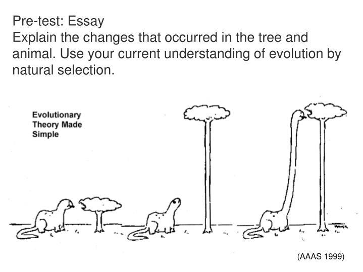 Pre-test: Essay