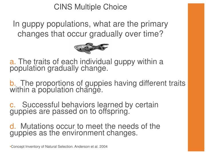 CINS Multiple Choice