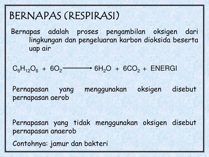 BERNAPAS (RESPIRASI)