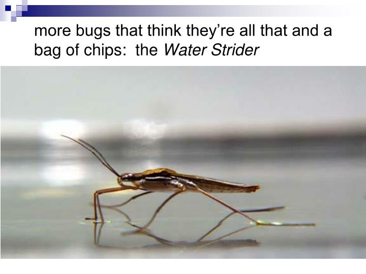 more bugs that think they're all that and a bag of chips:  the