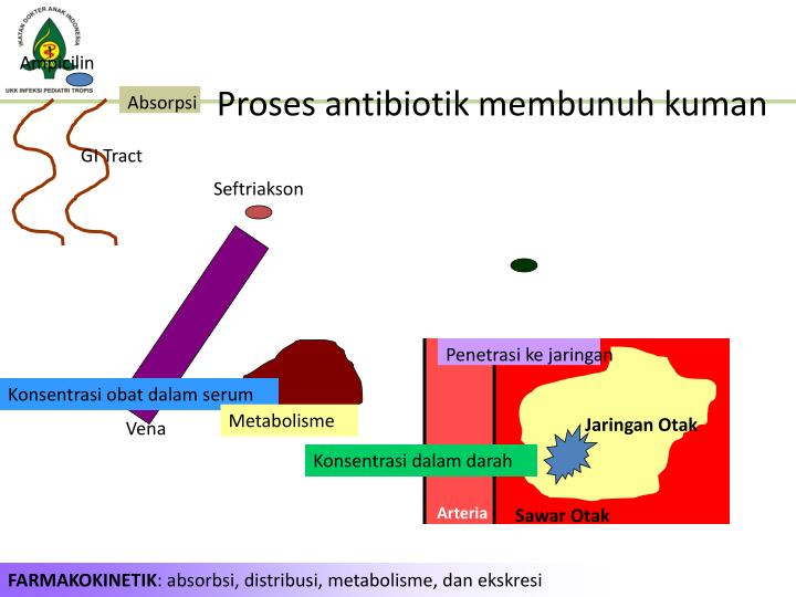 Proses antibiotik membunuh kuman