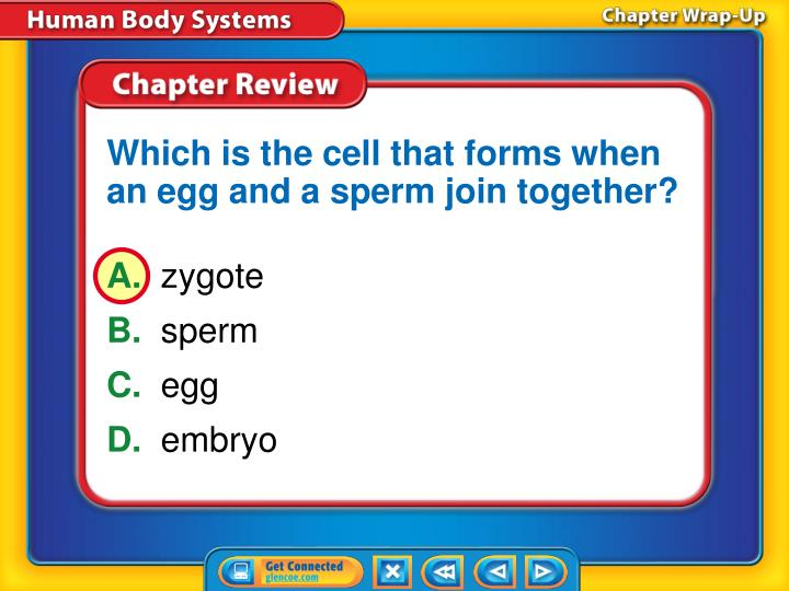 Which is the cell that forms when an egg and a sperm join together?
