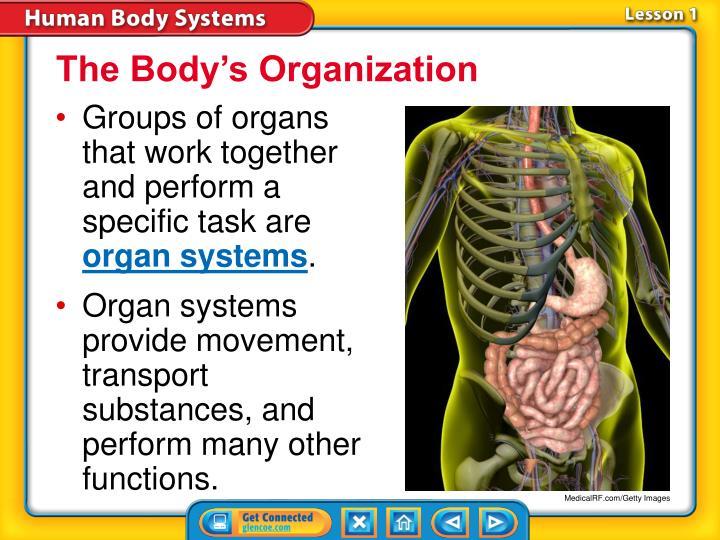 The Body's Organization