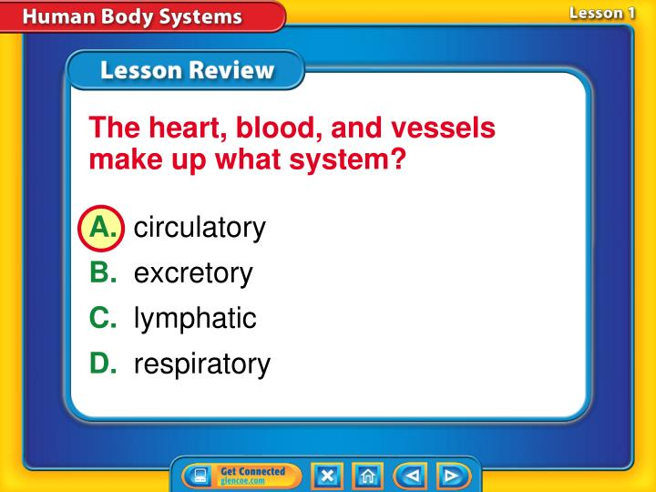 The heart, blood, and vessels make up what system?