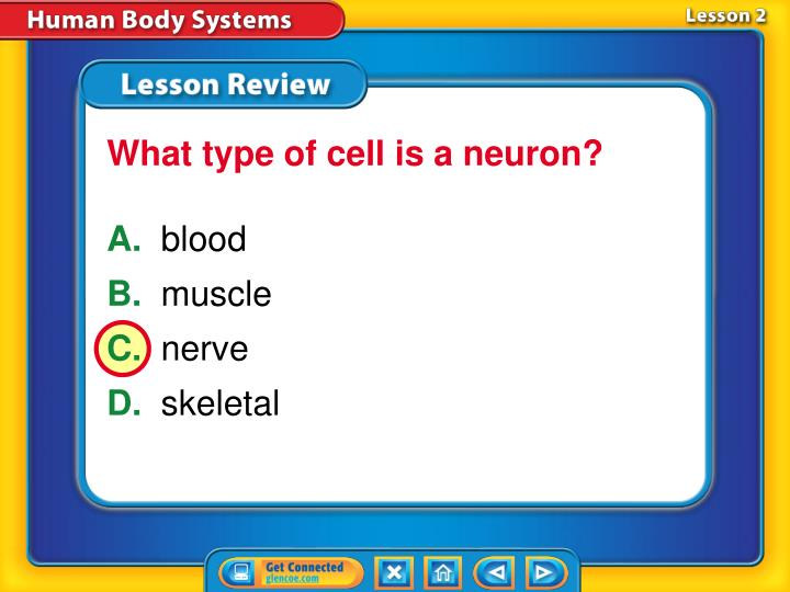 What type of cell is a neuron?