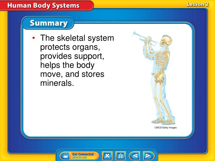 The skeletal system protects organs, provides support, helps the body move, and stores minerals.