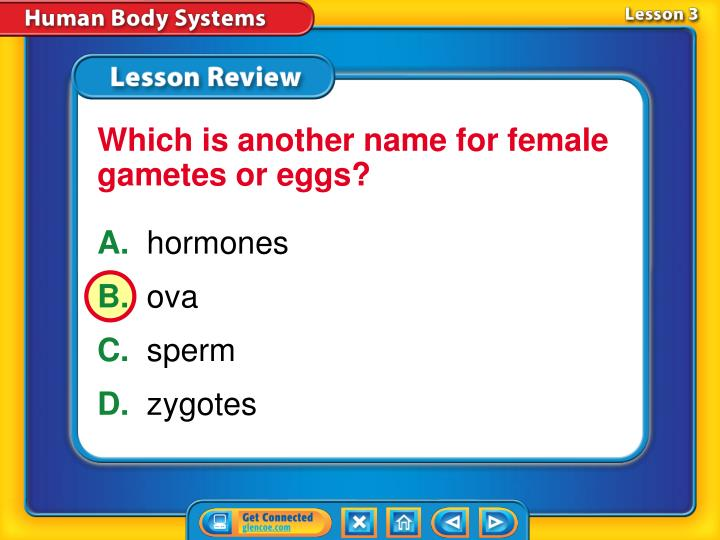 Which is another name for female gametes or eggs?
