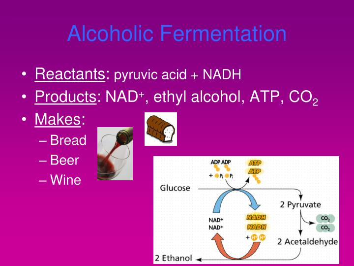 Ppt Cellular Respiration Powerpoint Presentation Id3990692