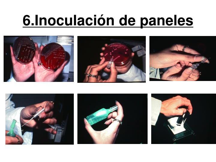 6.Inoculación de paneles