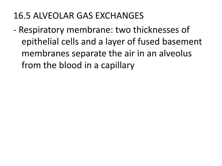 16.5 ALVEOLAR GAS EXCHANGES