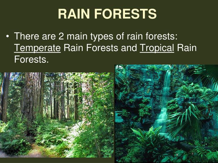 a introduction into two major types of rain forests tropical and temperate There are two types of rainforests, tropical and temperate tropical rainforests are found closer to the equator where it is warm temperate rainforests are found near the cooler coastal areas further north or south of the equator the tropical rainforest is a hot, moist biome where it rains all year long.