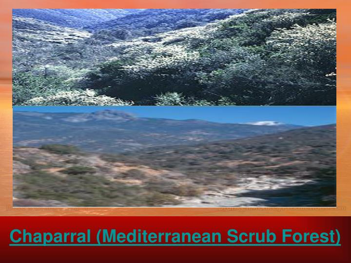Chaparral (Mediterranean Scrub Forest)