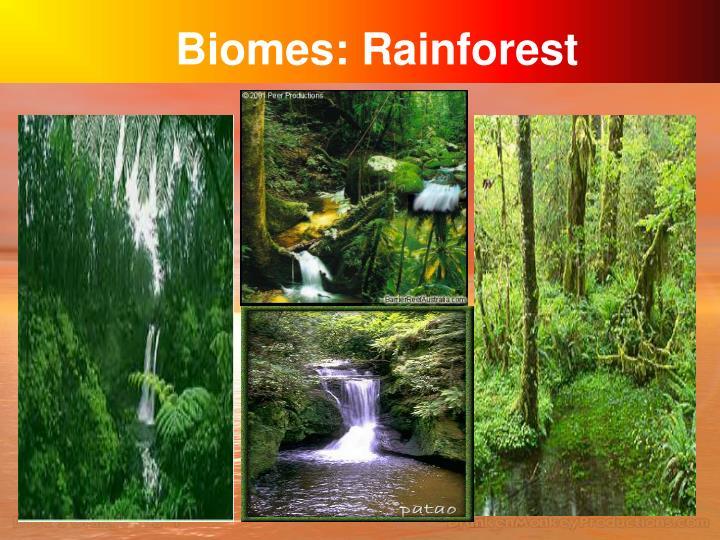 Biomes: Rainforest