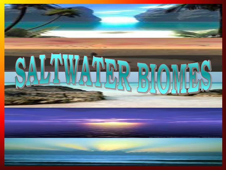 SALTWATER BIOMES