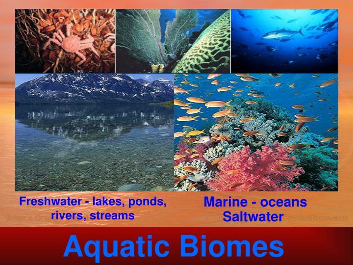 Marine - oceans