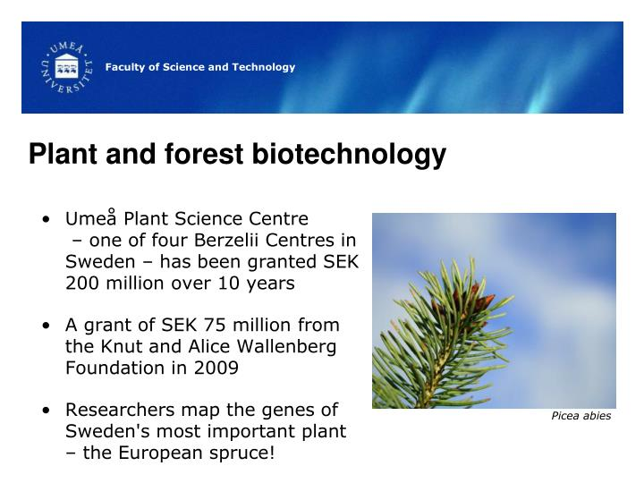 Plant and forest biotechnology
